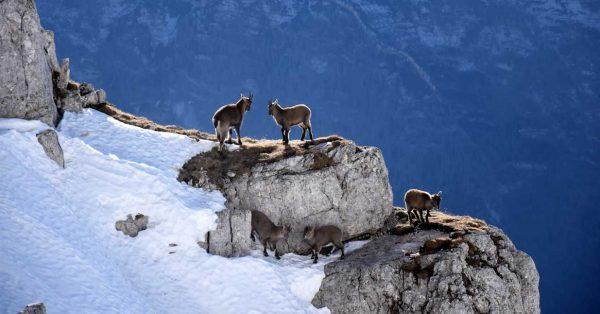 Geitjes in de bergen
