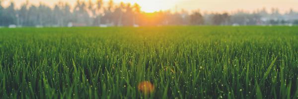 grasveld bij zonlicht